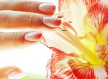 有桃红色Ombre的秀丽精美手设计举行关于的修指甲 库存照片