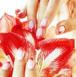 有桃红色Ombre的秀丽精美手设计举行关于的修指甲 免版税库存图片