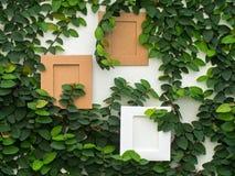 有框架的抽象绿色墙壁在常春藤金瓜白色背景  库存图片