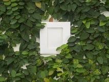 有框架的抽象绿色墙壁在白色背景 免版税库存照片