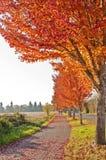 有桔黄色叶子的美丽的秋天走道 免版税库存照片