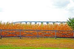 有桥梁的玉米田 免版税库存照片