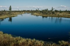 有桦树和杉树的大湖在沼泽在夏天 Kemeru拉脱维亚 免版税库存图片