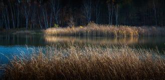 有桦树树丛的池塘 库存照片