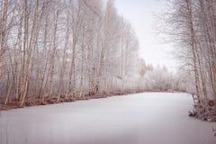 有桦树的冻湖在用雪盖的岸 免版税库存照片