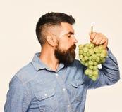 有梦想的面孔的种葡萄并酿酒的人嗅到葡萄 免版税库存图片
