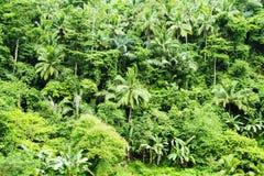 有棕榈和树的热带密林 未触动过的热带自然照片背景绿色灌木  图库摄影