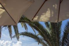 有棕榈树和天空的两把沙滩伞 库存照片