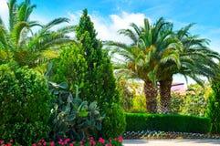 有棕榈树和常绿植物的公园 免版税库存图片