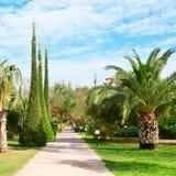 有棕榈树和柏的胡同 图库摄影