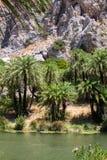 有棕榈树和河的Preveli峡谷 库存图片