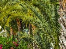 有棕榈树和美丽的花的热带庭院 免版税库存照片