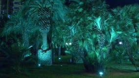 有棕榈树的夜热带公园在有夜照明设备的度假胜地 4K 股票录像