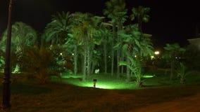 有棕榈树的夜热带公园在有夜照明设备的度假胜地 4K 股票视频
