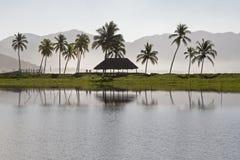 有棕榈树的太平洋盐水湖 免版税库存图片