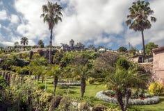 有棕榈树的庭院 免版税图库摄影