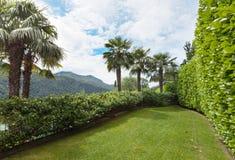 有棕榈树的庭院 库存照片