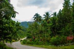 有棕榈树的残破的混凝土路在夏天 菲律宾 巴伦西亚,海岛内格罗斯岛 库存图片