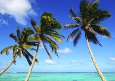 有棕榈树的海在Muri盐水湖,拉罗通加,库克群岛的热带水 免版税库存图片