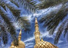 有棕榈树的清真寺 库存照片