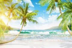 有棕榈树的热带海岛 库存图片