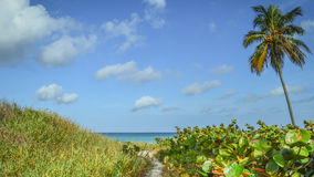 有棕榈树的热带海滩道路 免版税库存照片