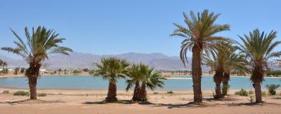有棕榈树的盐水湖在埃拉特,以色列 库存图片