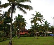 有棕榈树的绿叶 免版税库存照片
