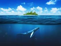 有棕榈树的美丽的海岛 水下的鲸鱼 免版税库存照片