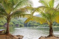 有棕榈树的美丽的湖 库存图片