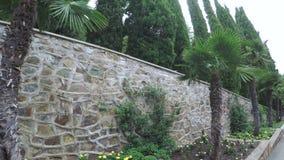 有棕榈树的花圃 股票录像