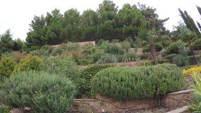 有棕榈树的花圃 影视素材