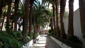有棕榈树的道路 库存照片