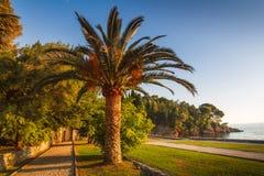 有棕榈树的风景公园在日落的海滩 Milocer公园 黑山 免版税库存照片