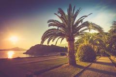 有棕榈树的风景公园在日落的海滩 Milocer公园 budva里维埃拉 黑山 免版税库存图片