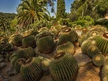 有棕榈树的仙人掌庭院 库存照片