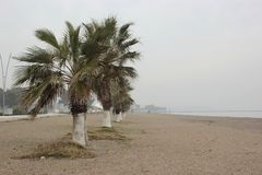 有棕榈的空的长滩 免版税库存照片
