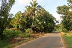 有棕榈的街道在斯里兰卡 免版税库存照片