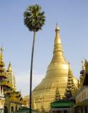 有棕榈的Shwedagon塔在仰光,缅甸 免版税图库摄影