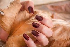 有棕色修指甲的女孩在手指拿着干燥秋天叶子手中 免版税库存照片