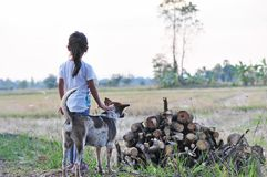 有棕色和白色狗的女孩在领域在农村泰国 免版税图库摄影