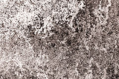 有棕色树荫的老白色墙壁 库存照片