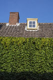 有棕色瓦片、管子和绿色叶子的屋顶 免版税库存图片