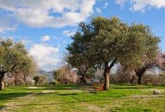 有棕色长凳的橄榄色的庭院 免版税库存照片