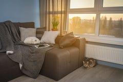 有棕色长沙发的舒适家庭娱乐室 库存图片