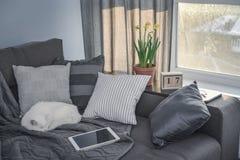 有棕色长沙发的舒适家庭娱乐室 库存照片