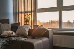 有棕色长沙发的舒适家庭娱乐室 免版税库存图片