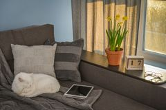 有棕色长沙发的舒适家庭娱乐室 免版税图库摄影