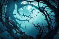 有棘手的灌木的黑暗的森林在绿色雾 免版税库存照片
