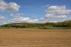有森林的农田在背景中 免版税库存图片